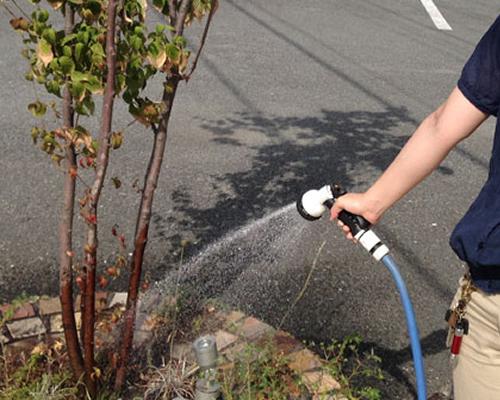 植木の水遣り写真