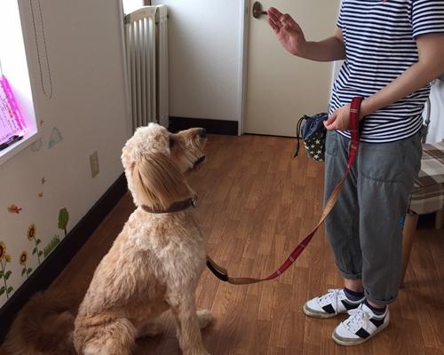 広島・東広島・三原・福山での犬のしつけ教室(ドッグトレーニング)の様子2