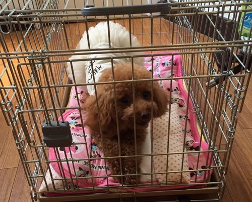 広島・東広島・三原・福山での犬のしつけ教室(ドッグトレーニング)の様子3