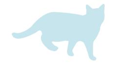 猫イメージ
